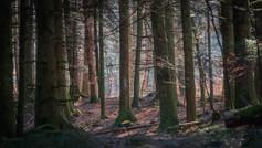 2021-02-28 Vosges - Forêt mousses-9.jpg