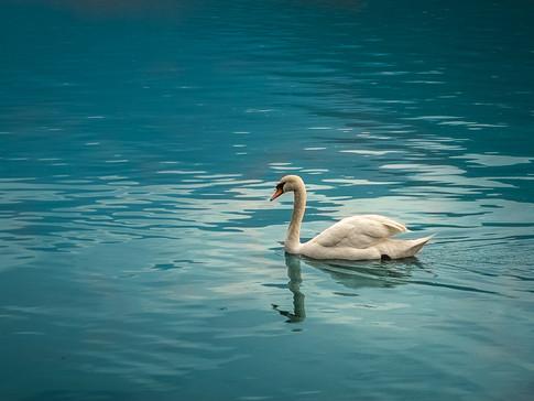 2019-05-17 Italie - Lac de Lugano - 2.jp