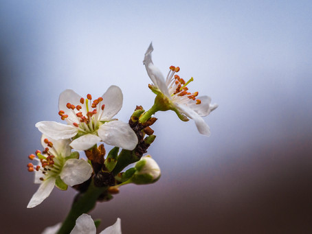 Timide arrivée du printemps