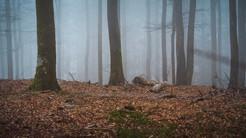 2021-02-26 Vosges - Hadol-22.jpg