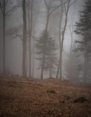 2021-02-26 Vosges - Hadol-20.jpg