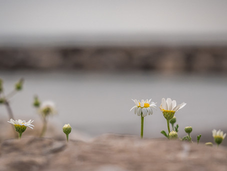 Macro florale aux Saintes Marie de la mer