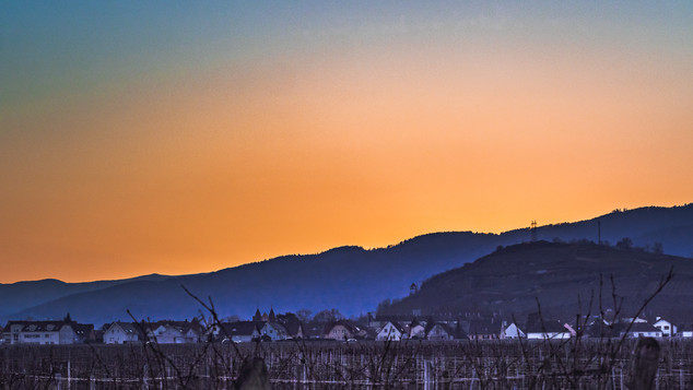 2021-02-21 Etangs d'Ingersheim p-47.jpg