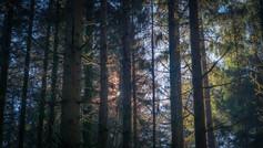 2021-02-28 Vosges - Forêt mousses-2.jpg
