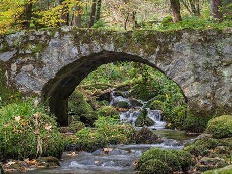 Joli cours d'eau dans le massif des Vosges