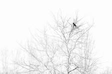 2021-02-21 Etangs d'Ingersheim nb-4-1