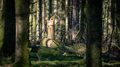 2021-02-28 Vosges - Forêt mousses-6.jpg