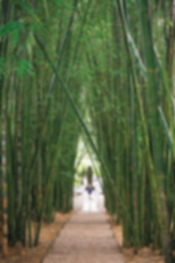 Bamboo Walk at Crystal Castle