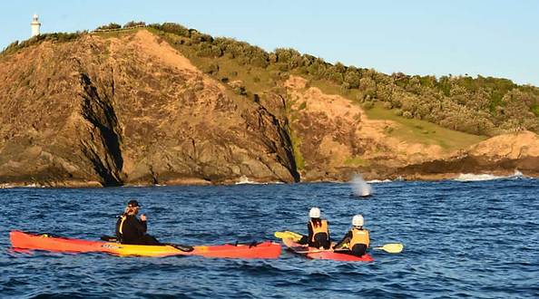 Sea kayaking with whales at Cape Byron