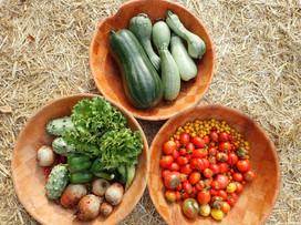 Récolte au potager