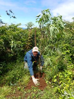 Plantation de plante endémique