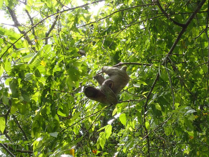 Un concentré de biodiversité au Costa Rica