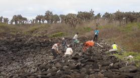 Nettoyage de la côte