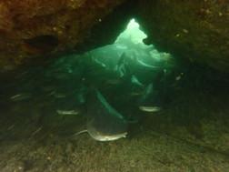 Grotte aux requins