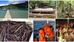 La Polynésie française en images