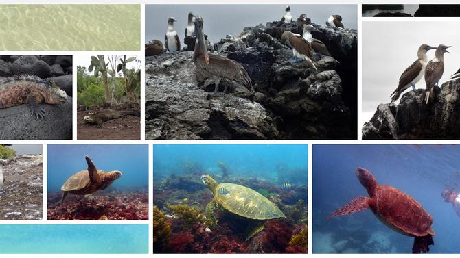 Les Galápagos en images