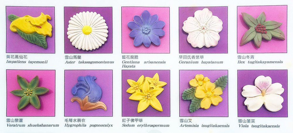 Ten kinds of flower on display