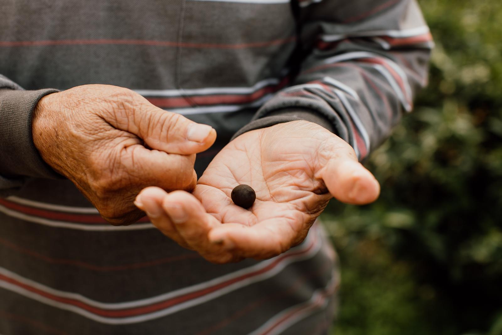 A Tea Seed