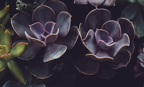 Succulently_edited.jpg