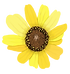 WIXFLOWER.png