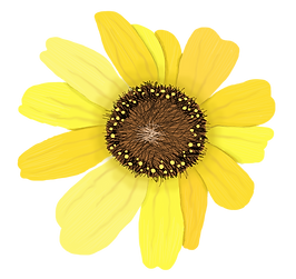 WIXFLOWER_edited.png