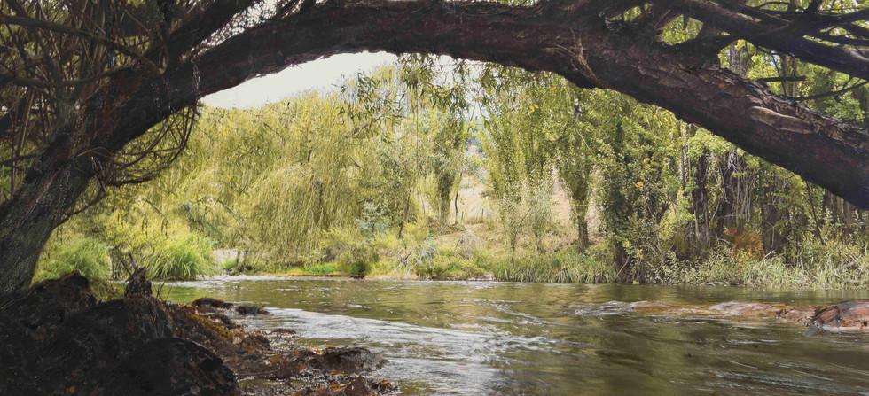 Cudgewa Creek - River Life