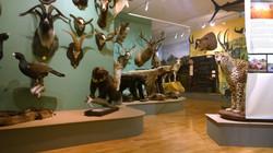 Metsästysmuseo