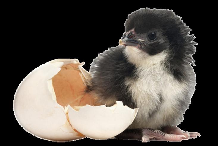 chick hatched egg_prev_ui.png