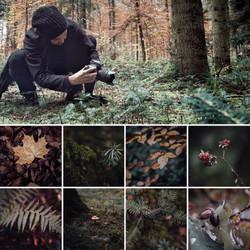 Meditative Wald-Photografie Winterthur