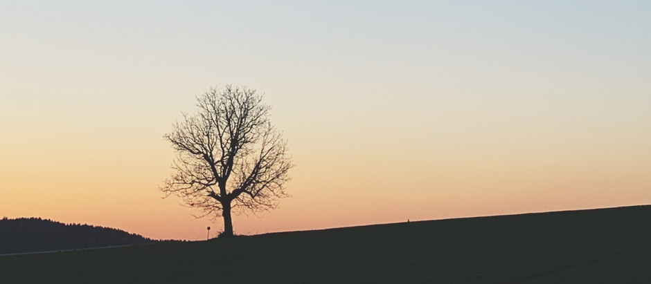 Zauberformel Resilienz - Umdenken in Zeiten der Ungewissheit & was uns jetzt stark macht