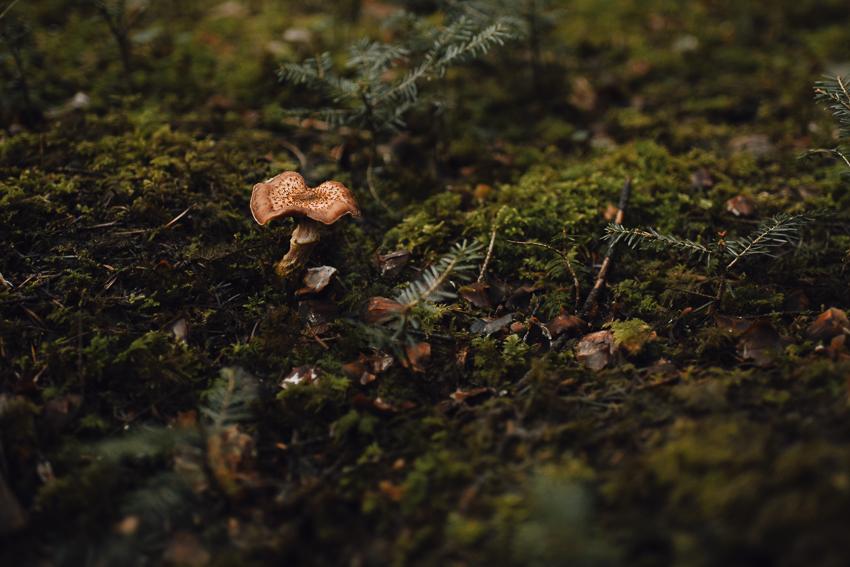 Waldfotografie Winterthur