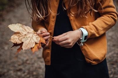 Herbstwald.jpg