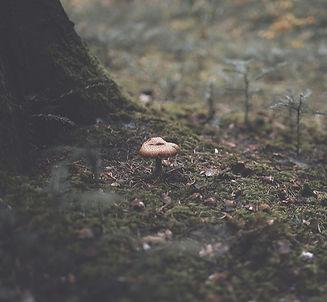 Meditative Waldfotografie Winterthur.jpg