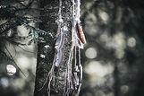 Waldevents Schweiz Fotoreportagen