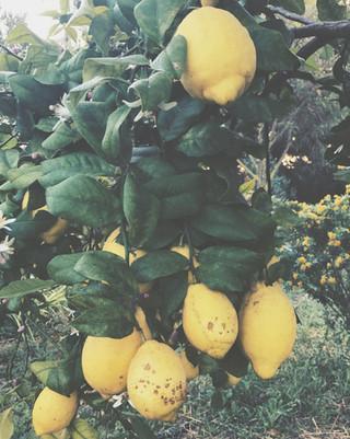 Fresh Limons Ibiza