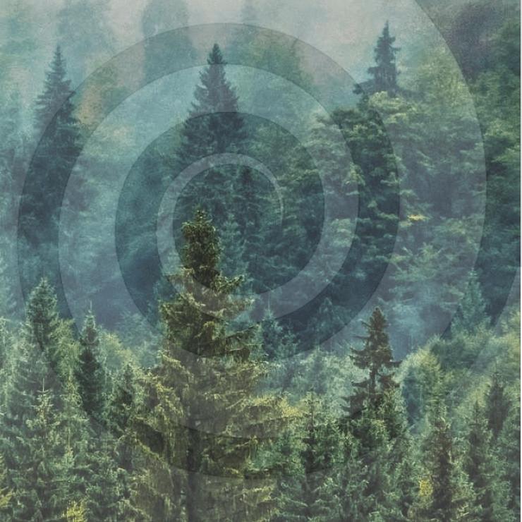 Forest Spirale