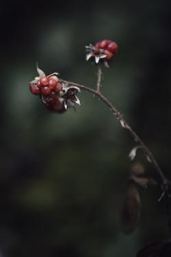 Meditative Wald-Fotografie Winterthur