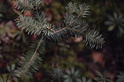 Meditative Wald-Fotografie