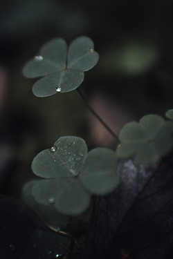 Workshop Meditative Wald-Fotografie