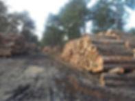 Weg vrijmaken doormiddel van bos kappen, door Tuintec
