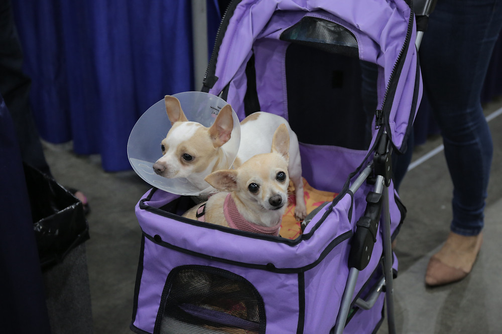 Dogs at Alien Con