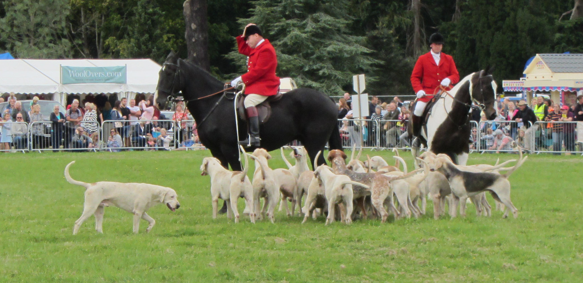 Romsey Show 2018 Main Arena Hounds hunts