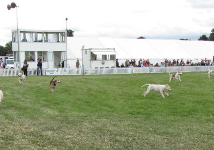 Romsey Show 2018 Main Arena Hounds on2.j
