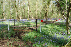 Fences in Bluebells