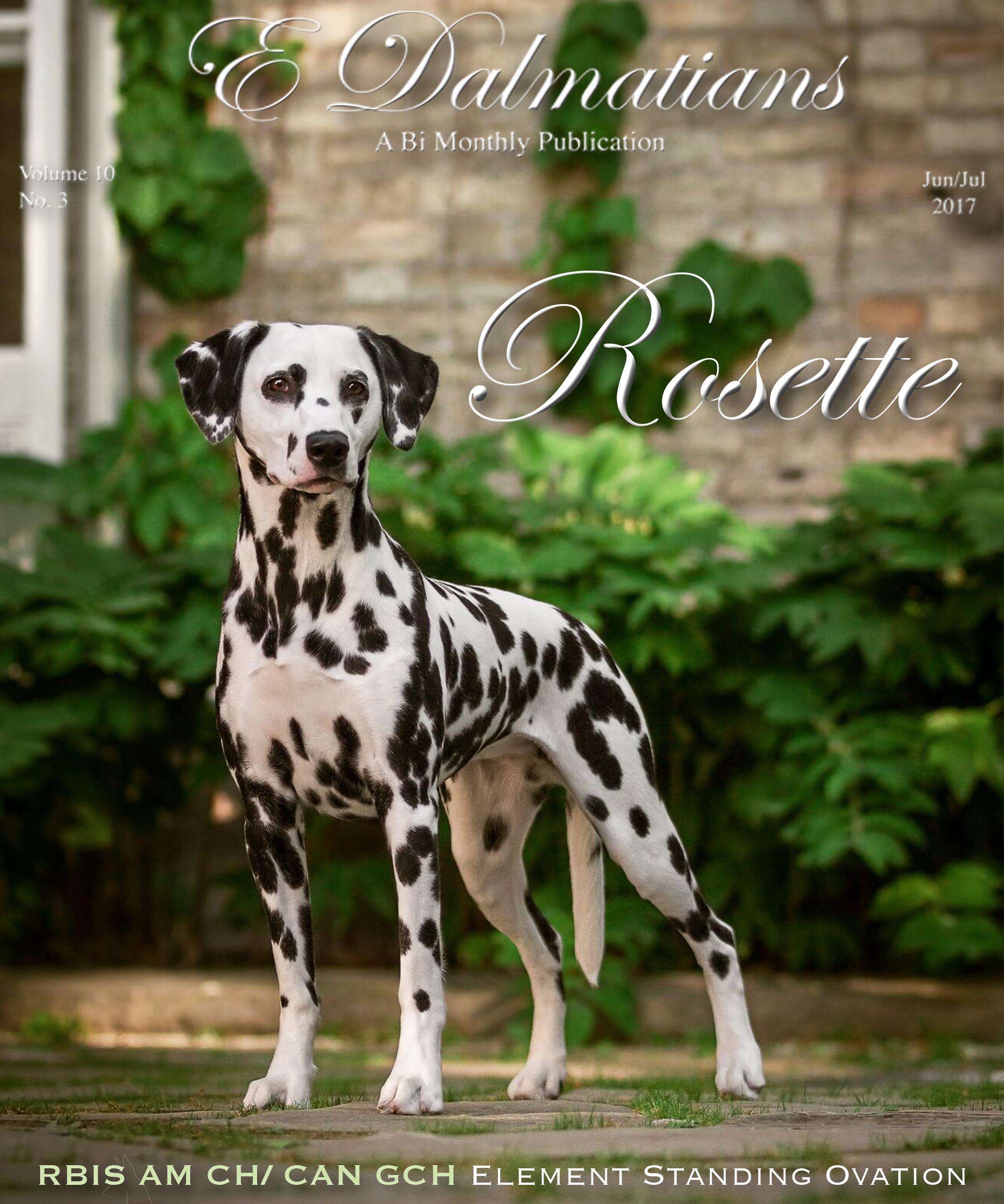 Rosette - Cover E-Dalmatian