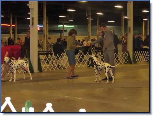 Blake AKC Dog Show