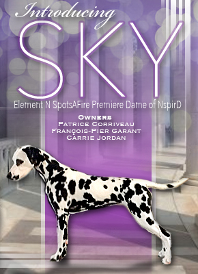 Sky - Canuck Dogs Ad - April