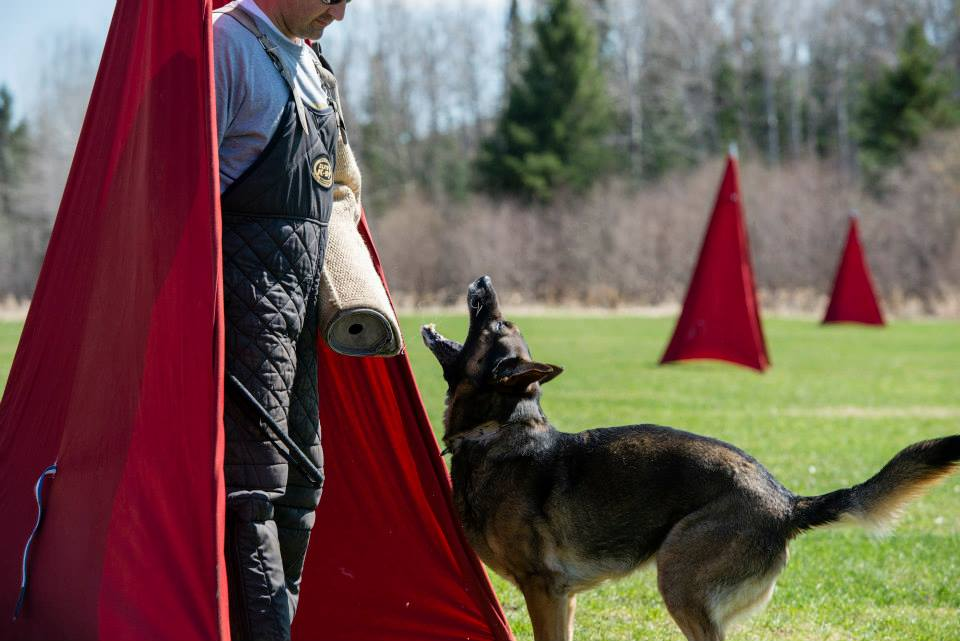 Cerberus ipo and schutzhund club