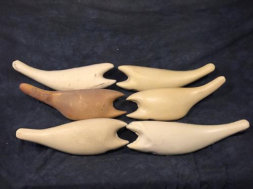 Striped Bass bodies 21lbs-60lbs