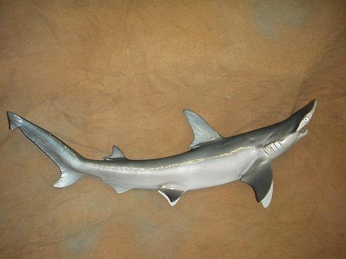 Shark, Bonnethead